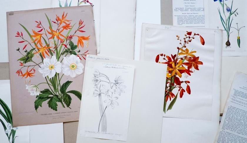 A selection of items from the RBGE Library Cuttings Collection showing plant illustrations