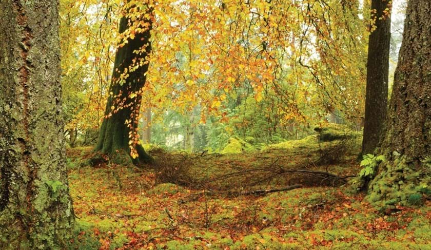 Native woodland in autumn