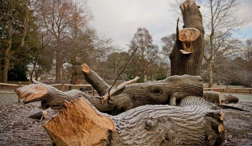 Dead sweet chestnut