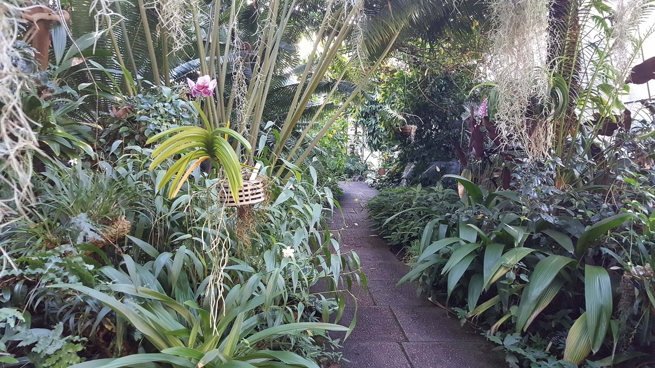 Orchid and Cycad