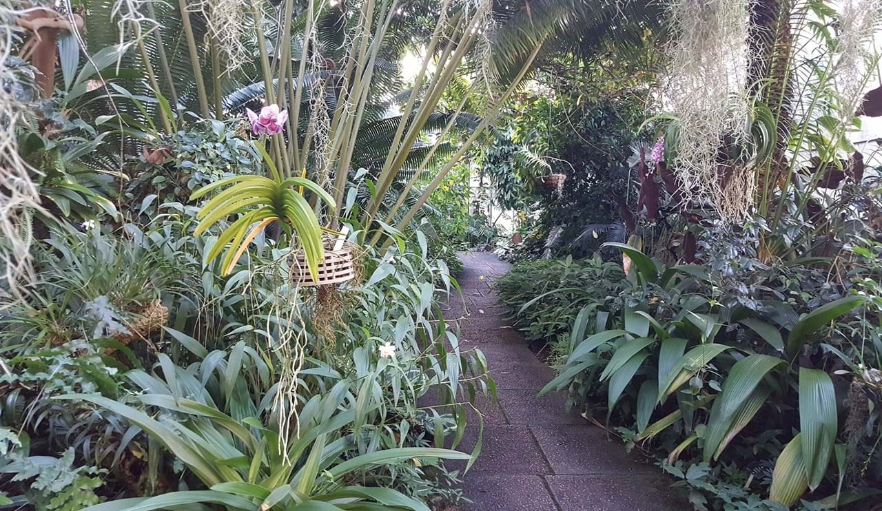 Orchid and Cycad House