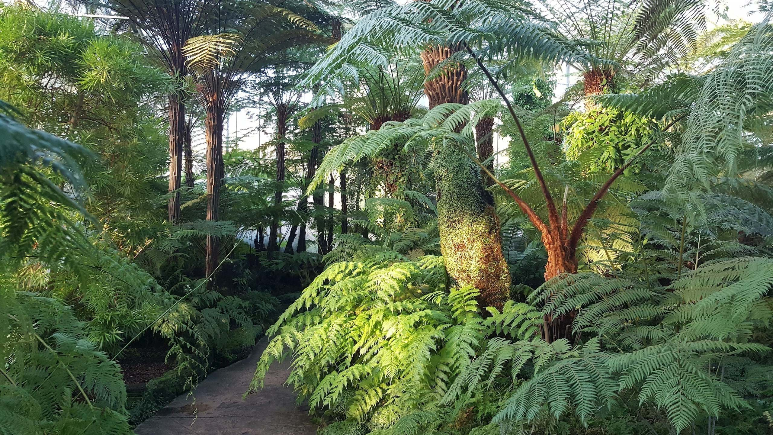 Fern and Fossil House