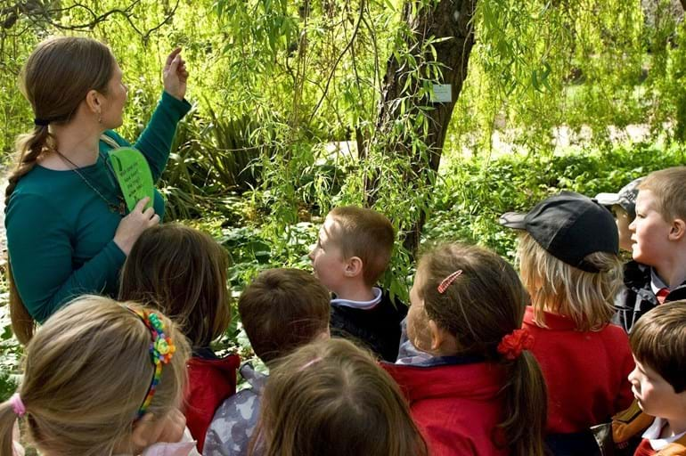 A teacher showing children a tree