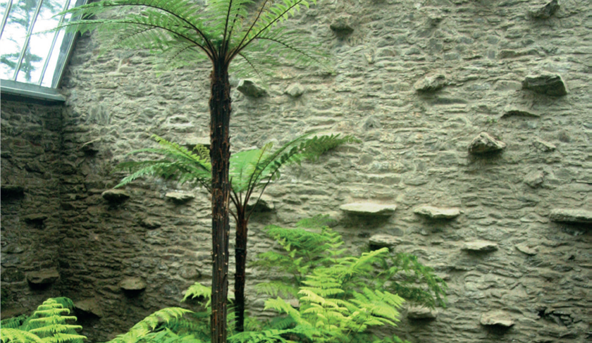 Palm tree against stone wall