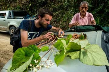 Dr Peter Moonlight, in the prccess of collecting a large begonia plant spread over a car bonnet
