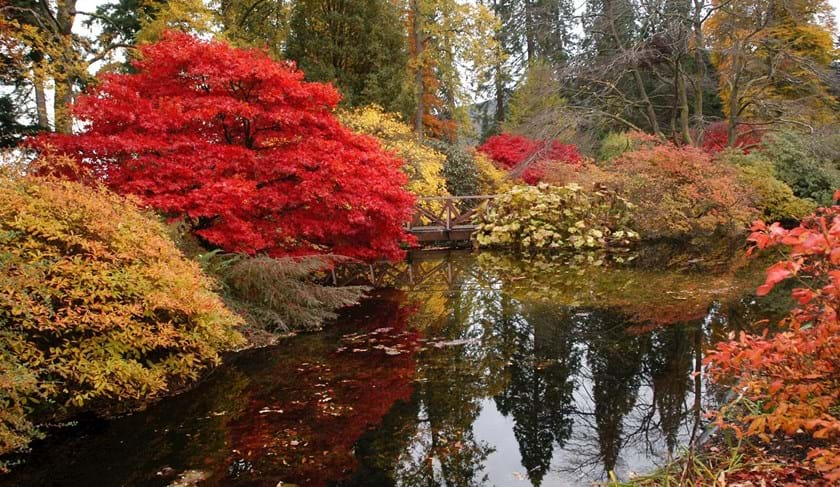 The Pond in autumn