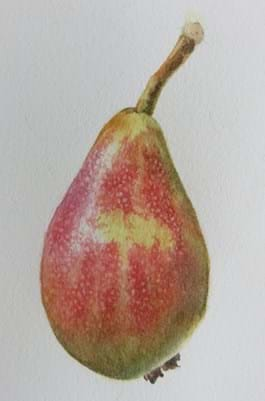 Painted green and red pear